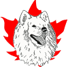 Samoyed Association of Canada